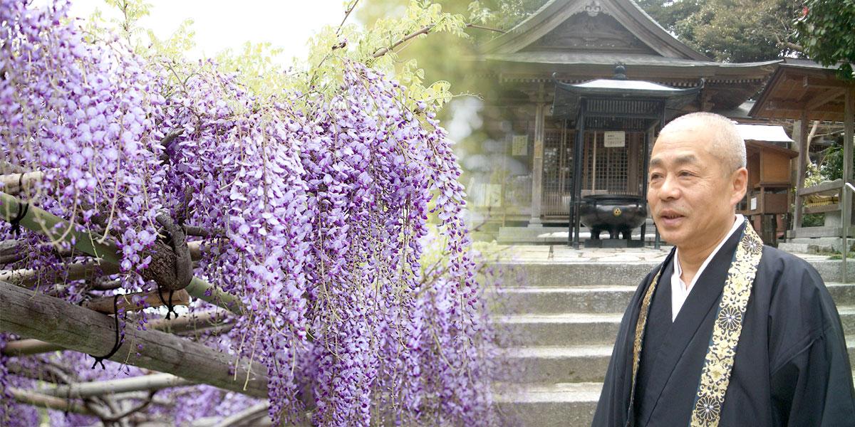 九州最古の寺 椿花山成就寺 武蔵寺「神事に欠かせない日本酒」